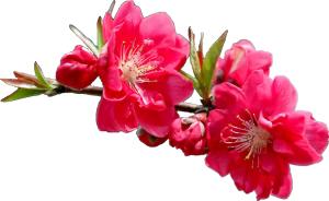 Первые Весенние Цветы Подснежники и другие