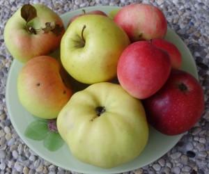 как правильно есть яблоки, зубная эмаль
