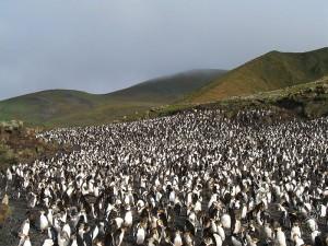 глобальное потепление, потепление климата, Антарктида, пингвины в Антарктиде, агрессивный вид, животные антарктиды