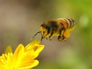 болезни почек, избыточный вес, натуральный мед, ослабленный иммунитет