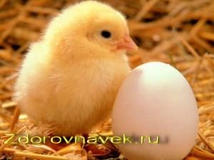 яйца полезные свойства