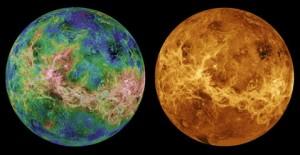 жизнь на Венере, живые организмы
