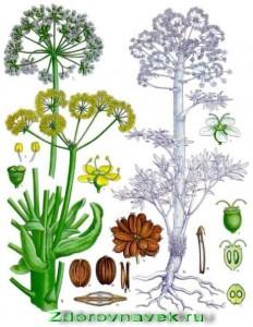 специи и пряности, асафетида, манго, кориандр, продолжение темы