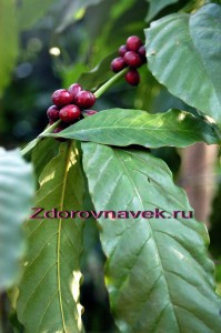 вредно ли кофе, кофе полезные свойства