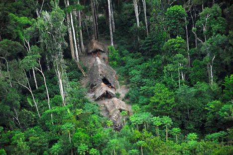 Тропические леса тропический лес