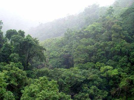 тропические леса, тропический лес, влажный тропический лес,  вызывают дождь