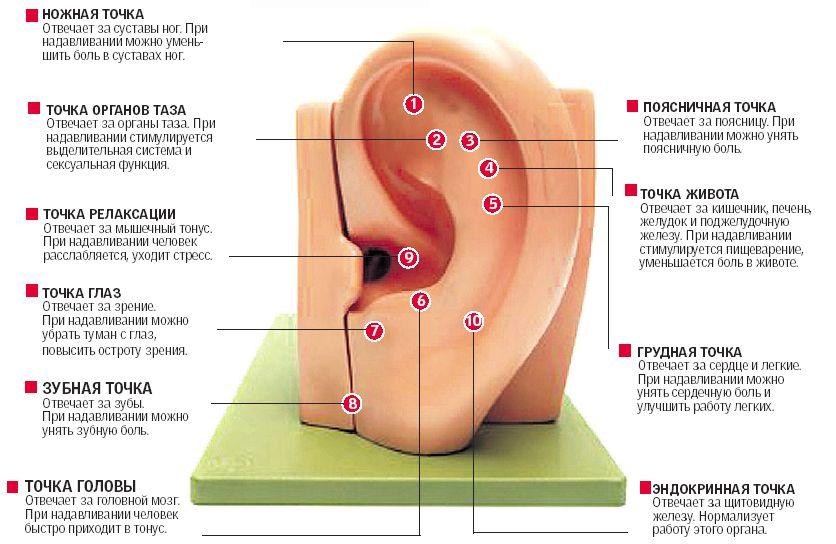 строение уха, диагностика организма, массаж ушей