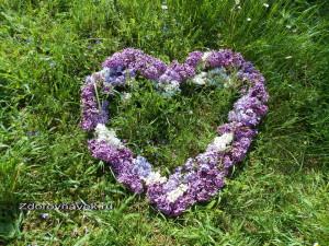 энергия, сердцем, основа молодости, выглядеть моложе, энергия сердца, система саморегуляции организма, состояние влюбленности, открытое сердце, сексуальные страсти