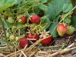 фитотерапия, заготовка ягод, заготовка плодов, сбор коры, календарь сбора, плоды, семена