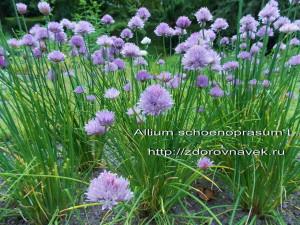 сбор лекарственных трав, природная аптека, фитотерапия, календарь сбора трав, заготовка трав,  целебные травы