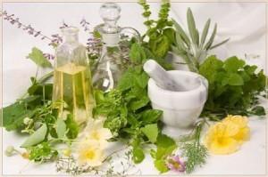 заготовка корней и корневищ, заготовка почек, лекарственные и ядовитые растения, фитотерапия, корни лекарственных растений, лекарственное растительное сырье