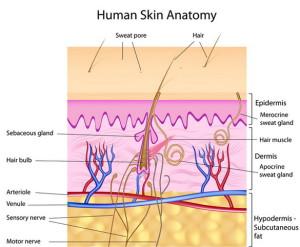 яйцеклетки, сперма, кожи клетки, лечение бесплодия, менопауза, биологические дети, роды, зрелый возраст, новости медицины, новости науки