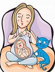 внешний вид, влияние +на психику человека, Toxoplasma gondii, паразиты +в организме человека, паразиты +в организме, паразиты, токсоплазмоз +при беременности, токсоплазма, токсоплазмоз, токсоплазмоз симптомы, токсоплазмоз симптомы +у человека
