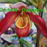 видео, красивое видео, орхидеи, смотреть онлайн, виды орхидей, красота природы, удивительные цветы, экзотические цветы