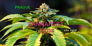 видео, Cannafest - The Largest International Hemp Fair in Europe, Cannafest 2014, November 7 - 9 2014, Incheba Expo Prague, Cannafest, Prague, Prague hemp festival, international hemp fair, czech hemp, cannabizz, Конопляный фестиваль, Cannafest 2014, czech republic, prague