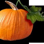 запеканка, овощная запеканка, запеканка с овощами, Cooking (Award Discipline), Culinary Art (Profession), запеканка, готовим брокколи, как готовить брокколи, блюда из брокколи, броколли в духовке, брокколи, приготовление капусты брокколи, еда, кулинария бесплатно, кулинария рецепты, пища, продукты, блюда, овощи, урок, тыква, кулинария, рецепт, как приготовить, запеканка из цветной капусты, запеканка без яиц, вегетарианские блюда, диетические блюда